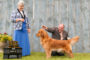 Windsor All Breed Training & Tracking Club
