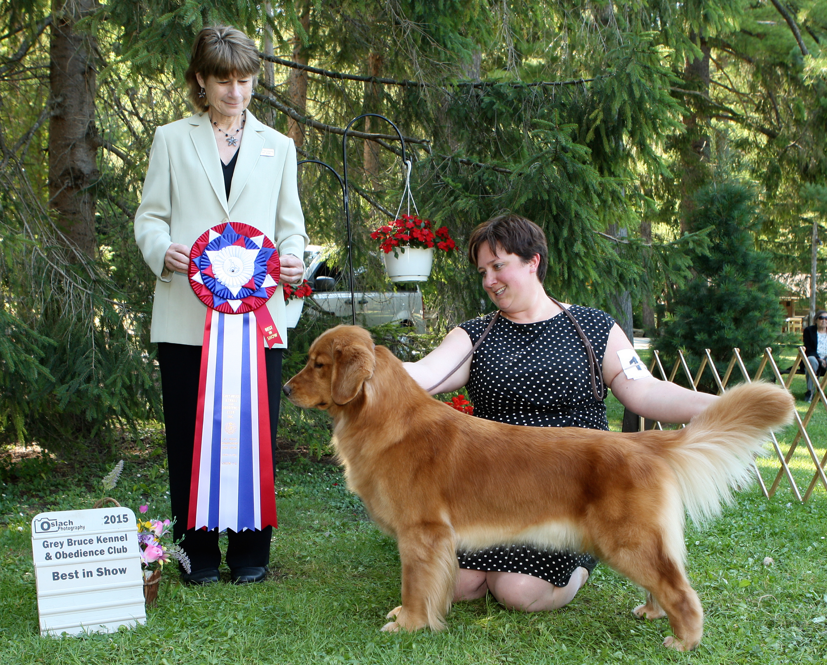 Best in Show at the Grey-Bruce Kennel and Obedience Club under esteemed Sporting Dog specialist Honey Glendinning (Canada)