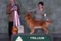 Trillium Dog Fanciers