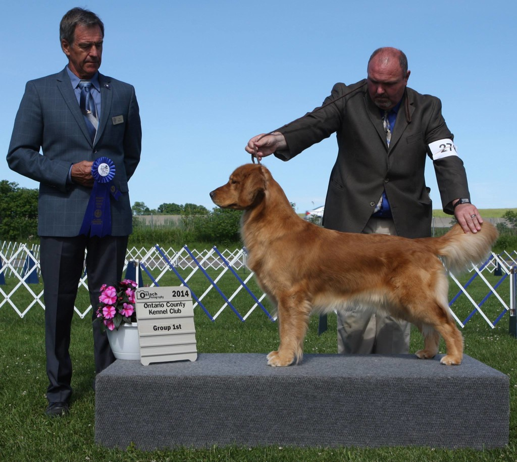 Group 1st at the OCKC Show under Judge Ole Nielsen