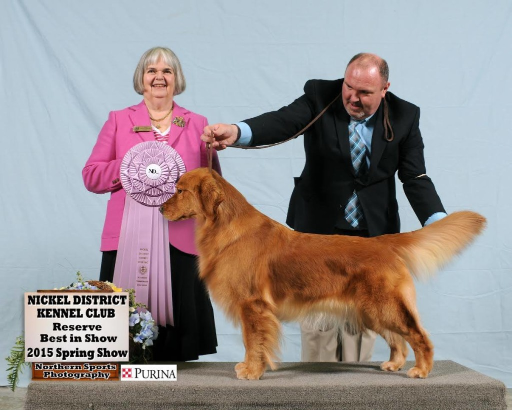 Reserve Best In Show at the Nickel District Kennel Club under Judge Joy Hodgkinson